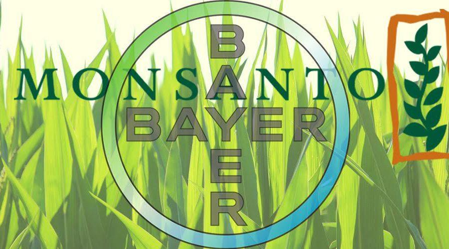 Bayer Monsanto logos cornfield