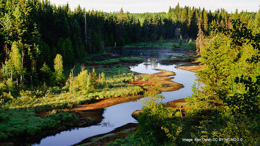 Greenpeace Responds to National Review Piece by Richard Garneau of Resolute Forest Products
